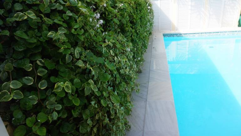 Jardim vertical em piscina